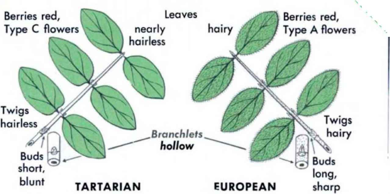 Opposite Simple Leaf Examples