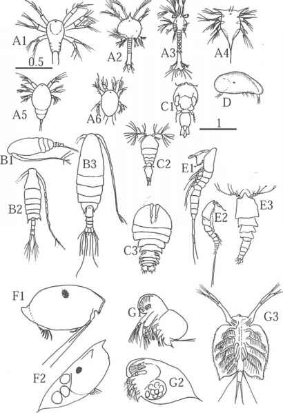 Zooplankton Identification