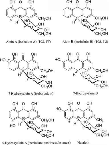 Biosynthesis Anthraquinone Glycosides