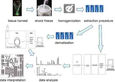 analysis of gc ms rice metabolomics data A gc–ms metabolomics approach was also applied in combination data processing & data analysis in ms-based metabolomics data.