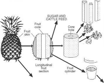 Pineapple Fruit Longitudinal Section