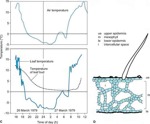 Prostate Supercooling