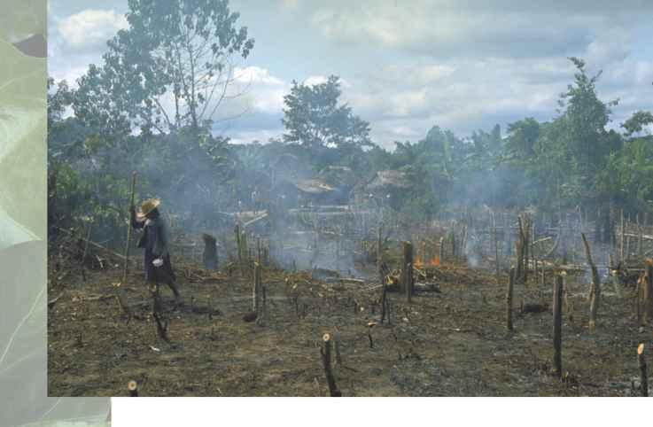 Фото подсечно огневое земледелие