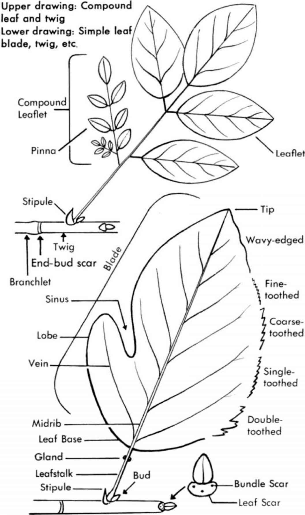 How to Use This Book - Small Tree - Medicinal Plants Archive