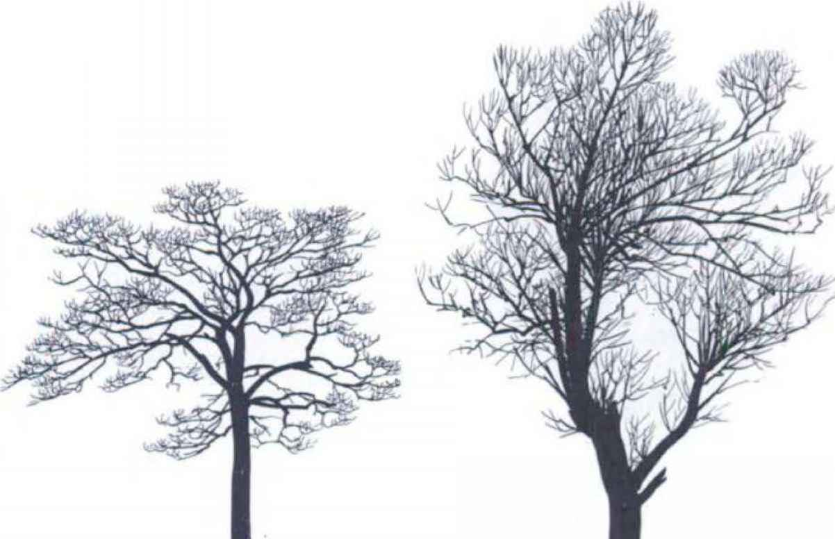 Tree Silhouettes Small Tree Medicinal Plants Archive