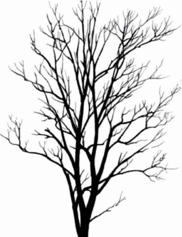 White Tree Silhouette Wallpaper also 45353 sugar maple in addition Trees Shrubs House Plants 2d Dwg Block Autocad 3 further Tree Of Life also Tree Trunk Clipart Sillouette. on black and white birch tree drawing